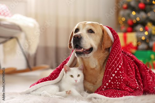 Leinwand Poster  Adorable dog and cat together under blanket at room decorated for Christmas