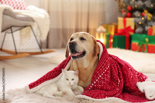Montage in der Fensternische Akt Adorable dog and cat together under blanket at room decorated for Christmas. Cute pets