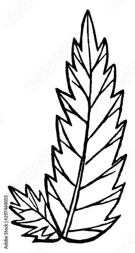 Fork-Veined Leaf vintage illustration. Canvas-taulu