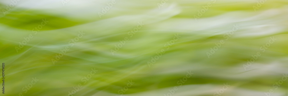 Fototapety, obrazy: Abstract green blured background