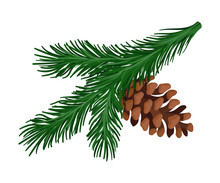 Bright Green Spruce Branch With A Pine Cone. Vector Illustration.