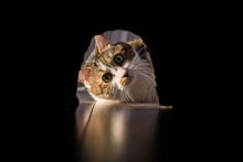 The Cat Preys On The Mouse. Wa...