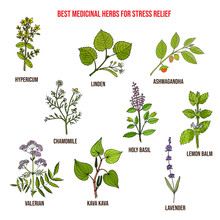 Best Medicinal Herbs For Stres...