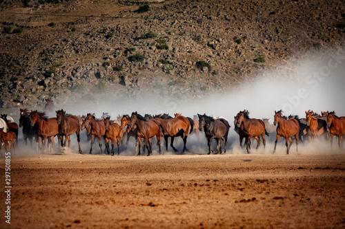 Fotografie, Obraz  wild horses running in the plain