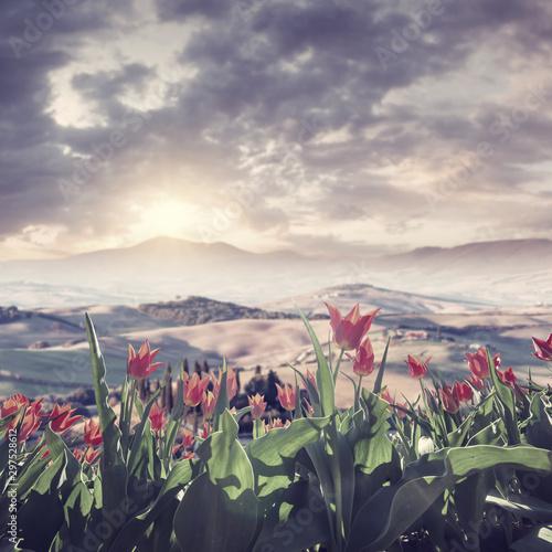 Montage in der Fensternische Lavendel Landscape with beautiful tulip flowers