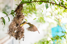 Birds In The Nest Hummingbird ...