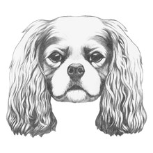 Portrait Of Cavalier King Char...