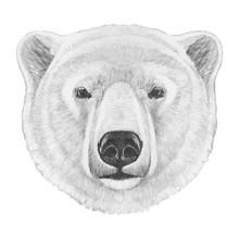 Portrait Of Polar Bear. Hand D...