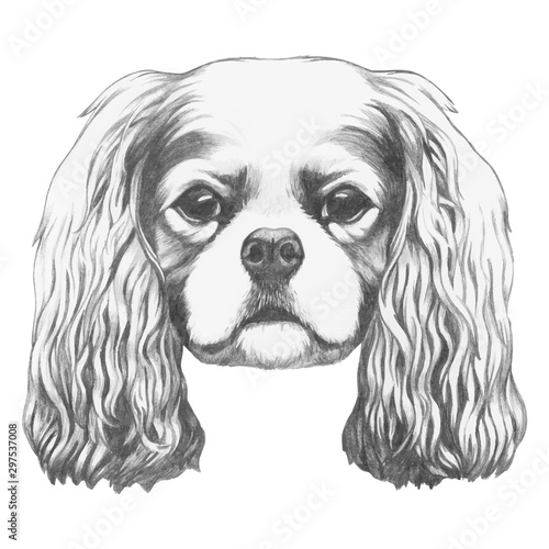 Obraz Portrait of Cavalier King Charles Spaniel. Hand drawn illustration. Vector isolated elements. - fototapety do salonu