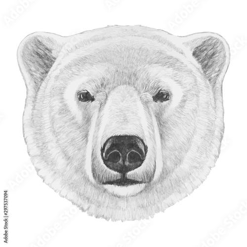 Fototapeta Portrait of Polar Bear