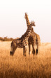 canvas print picture - African safaris and Landscapes
