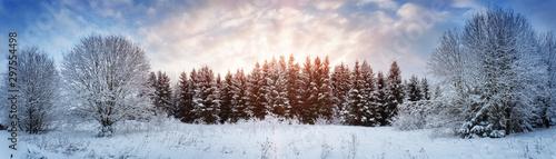 Fototapeta Pine trees in winter landscape at sunset obraz