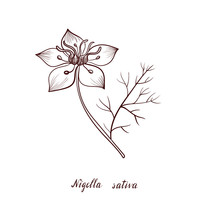 Vector Drawing Black Seed Flower