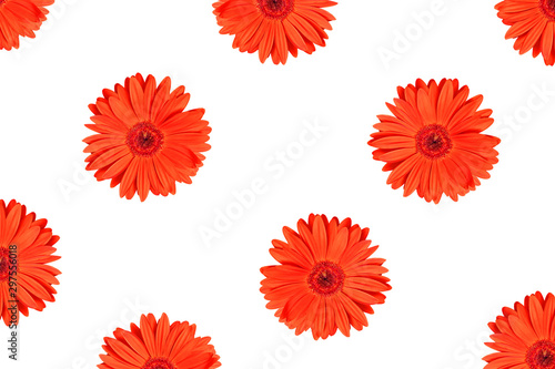 Texture or pattern red gerbera flower isolated on white background. For design. Flat lay, top view.