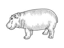 Hippopotamus Animal Sketch Eng...