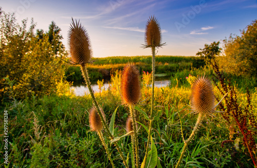 grass and flowers - 297581284