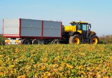Tractor With A Big Agricultural Trailer Near A Soybean Field During The Autumn Harvest