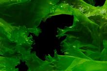 Green Algae Or Seaweed Can Produce Biofuel Industry