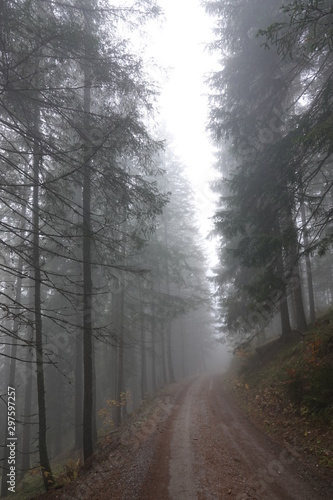 Foto op Aluminium Begraafplaats mystical forest with fog in autumn