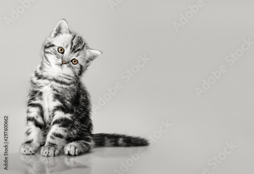 Fotografie, Tablou  one grey stripy beautiful little kitten