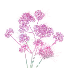 Bouquet Of Outline Verbena Or ...