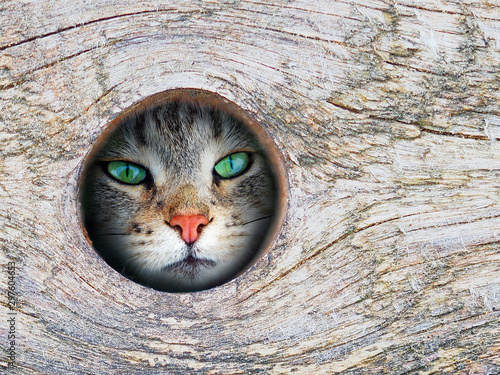 Cat looks through a hole in a tree - 297604653