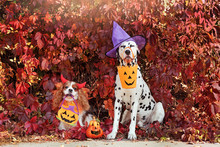 Two Dogs Wearing Halloween Costumes Against Autumn Leafs Background