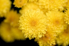 Closeup Shot Of A Beautiful Yellow Flower With A Blurred Background