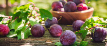 Ripe Plum Berries In A Basket On A Wooden Vintage Table In The Garden With Copy Space, The Idea Of Home Canning And Organic Ecological Bio Food