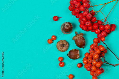 Fotomural  Bunches of mountain ash and several acorns lie on a mint-colored surface