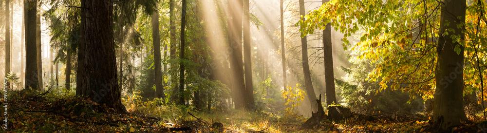 Light rays autumn forest landscape
