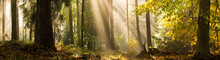 Light Rays Autumn Forest Landscape