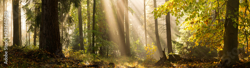 Papiers peints Route dans la forêt Light rays autumn forest landscape