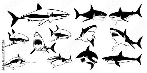 Fotografie, Obraz  set different shark silhouettes for you design on white background