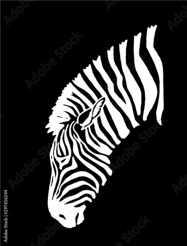 Fotografía  Graphical portrait of zebra isolated on black background,vector illustration