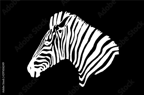 Cuadros en Lienzo Graphical portrait of zebra isolated on black background,vector illustration