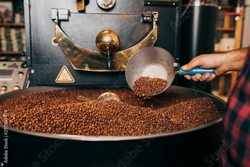 Man's hands holding freshly roasted aromatic coffee beans over a modern coffee roasting machine Wallpaper Mural