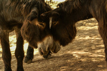 Two Donkeys Love Each Other