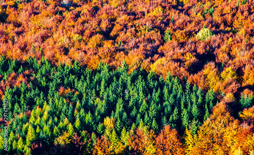 Montage in der Fensternische Rotglühen aerial view of heart shaped autumn forest and green firs - save our planet against global warming