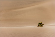 Lone Bush In Sand Dunes