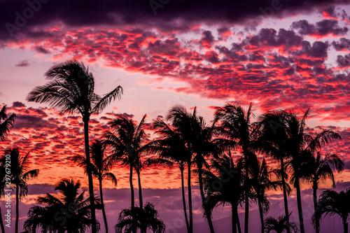 Foto auf Leinwand Hochrote tropical sunset