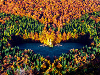 Fototapetaaerial view of heart shaped autumn forest and green firs - save our planet against global warming