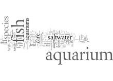 Different Types Of Saltwater A...