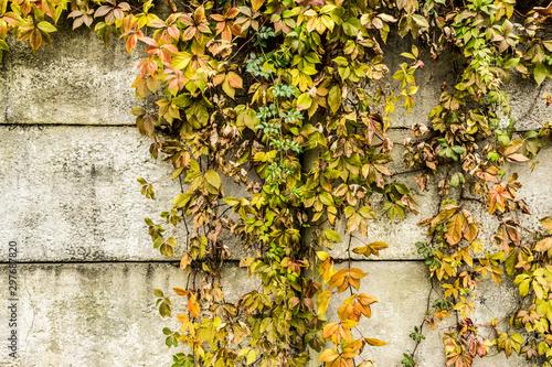 branchy drying plant against a concrete wall, abstract autumn background Tapéta, Fotótapéta