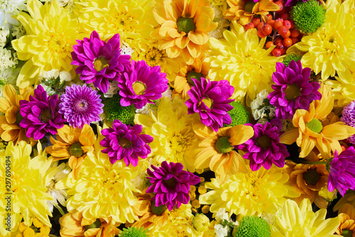 Fototapety, obrazy: Autumnal flowers background. A carpet of colorful flowers. View from above. Holiday background.