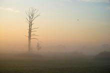 Drzewa We Mgle, świt Nad Doli...