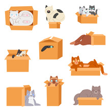 Cat In Box Vector Kitty Pet Ch...