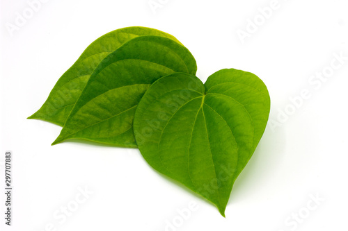 Fresh Piper betel leaf on white background Wallpaper Mural