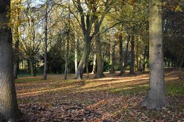 Beautiful autumn landscape with trees and dried leaves fallen on the ground.