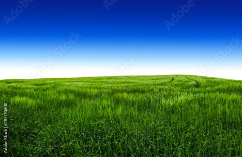 Fotobehang Donkerblauw Summer field with green grass